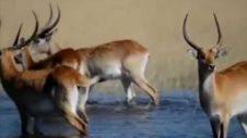 Spotlight On: Zambia